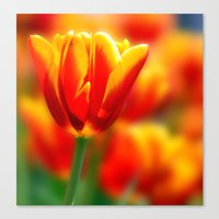 tulip Canvas Prints featuring Tulip by Tracie Brown