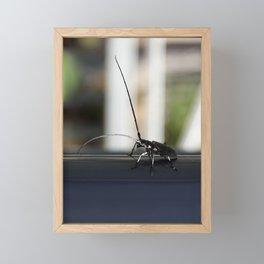 Long antennae for feelers of wide world Framed Mini Art Print