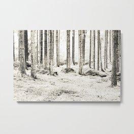 Tree Trunks II Metal Print