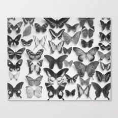 Wings II Canvas Print