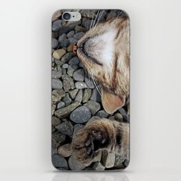 Ecstatic cat iPhone Skin
