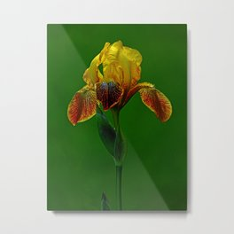 The Wise Iris Metal Print
