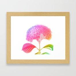 Hydrangia Dreaming Framed Art Print