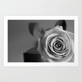Winter Rose II Art Print