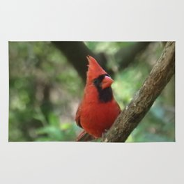 Northern Cardinal (male) Rug