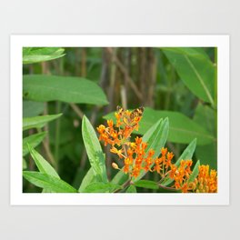 Tiny Little Orange Butterfly Macro Childrens bedroom Living Room Decor Art Photography  Art Print