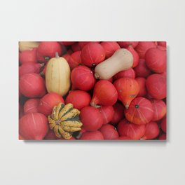 gourds 2, color photo Metal Print