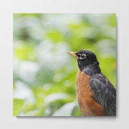 Robin Portrait Metal Print