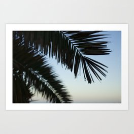 Palm Fronds at Dawn Art Print