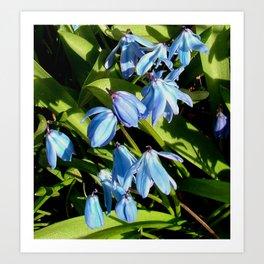 Flower Pic 5 Art Print