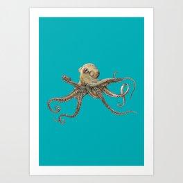 Octopus – drawing Art Print