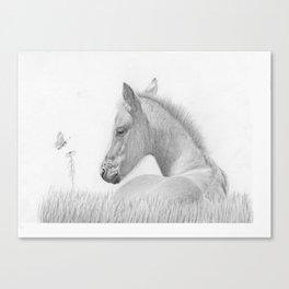 Young Wonder Canvas Print