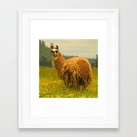 llama Framed Art Prints featuring Llama by Nature In Art...