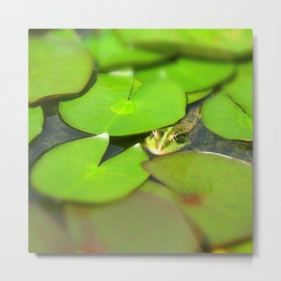 green frog I Metal Print
