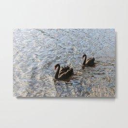 Black Swans in Melbourne Metal Print