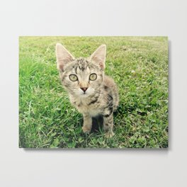 Inquisitive Cat Metal Print