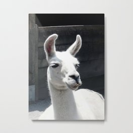 Llama Tell Ya... Metal Print