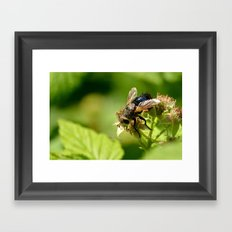 Just a fly. Framed Art Print