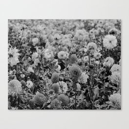 The Garden (Black and White) Canvas Print