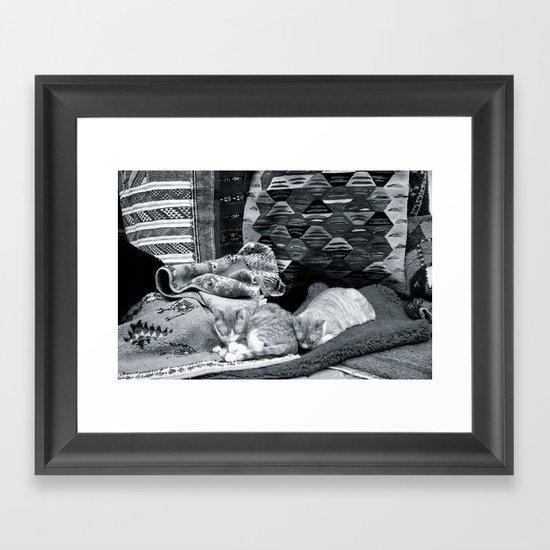 Marrakesh Cats IV Framed Art Print