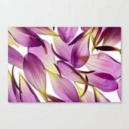 Dahlia Petals Canvas Print