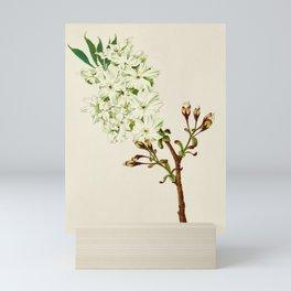 Gyoi-ko or Robe Yellow Cherry Blossoms Mini Art Print