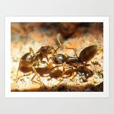ant battle Art Print
