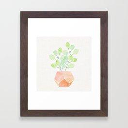 Bonsai Jade Plant Framed Art Print