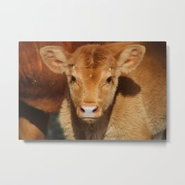 Portrait of a Calf Metal Print