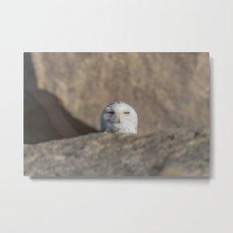 Peekaboo Snowy Owl Metal Print