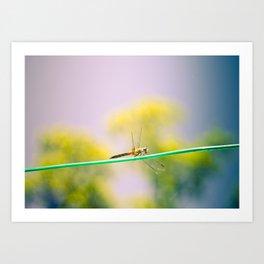 Dragonfly! Art Print