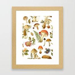 Mushroom Dreams Framed Art Print