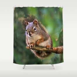 Who, Me? A Saucy Red Squirrel Shower Curtain