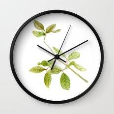 A branch of the tree Psidium fortium Wall Clock