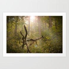 Magical Appalachia Art Print