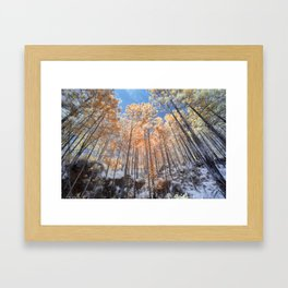 Looking up looking at the trees Framed Art Print