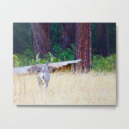Buck deer in Yosemite Metal Print