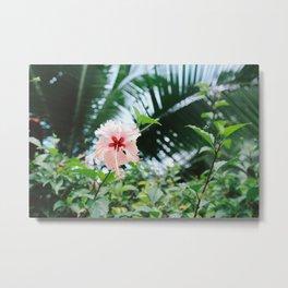 Costa Rican florals Metal Print