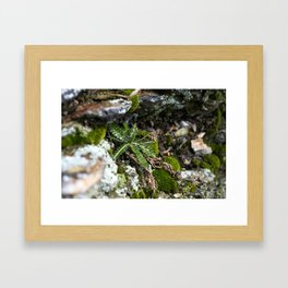 Small Fern Framed Art Print