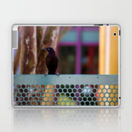 Boat Tailed Grackle Laptop & iPad Skin