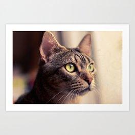 Tristan, el gato. Art Print