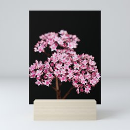 Sedum 13 Mini Art Print