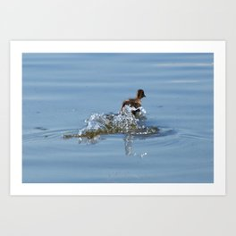 Duck in the river Art Print