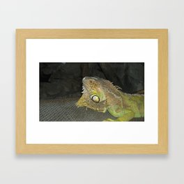 big lizzard Framed Art Print