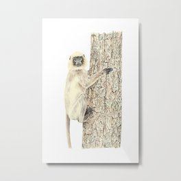 Monkey in the tree Metal Print