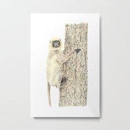 Monkey in the tree Metal Print