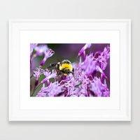 bee Framed Art Prints featuring Bee by Dora Birgis