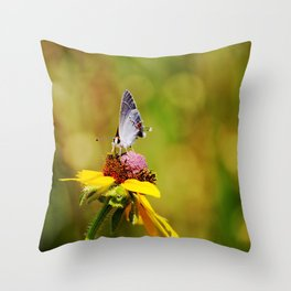 Brown Eyed Susan & Hairstreak Butterfly Throw Pillow