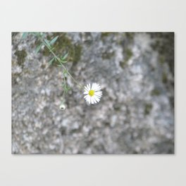White flower on the stone Canvas Print