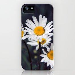 Ox-eye daisies iPhone Case